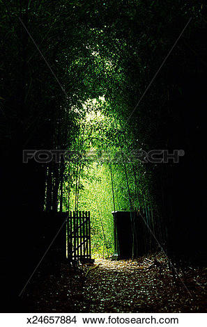 Stock Photo of Wooden gate in midst of bamboo forest x24657884.