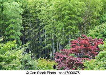 Picture of Green bamboo and red acer.
