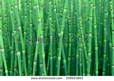Looks Like Bamboo Stock Images, Royalty.