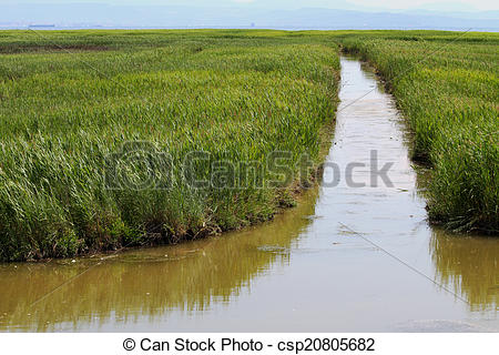Pictures of water channel in the midst of the immense Reed and.
