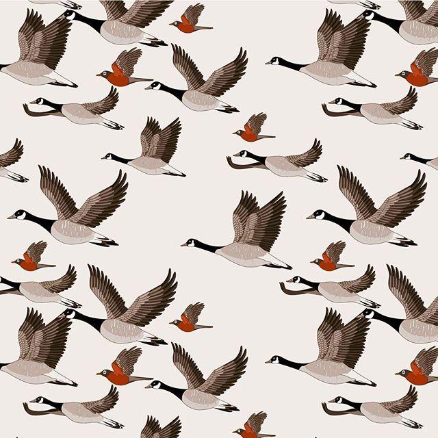 1000+ ideas about Migratory Birds on Pinterest.