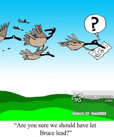 Bird Migration Cartoons and Comics.