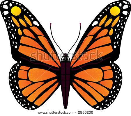 Monarch Butterfly Top Side View Stock Vector 82582120.