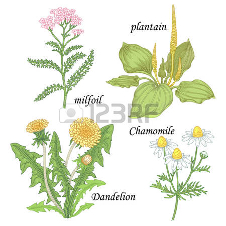 Medicine Isolated Stock Vector Illustration And Royalty Free.