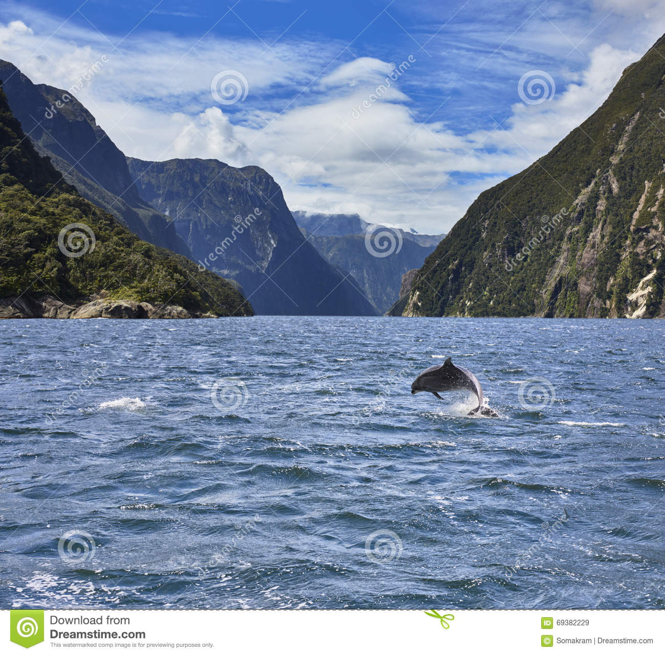 Dolphin In Milford Sound Stock Photo.