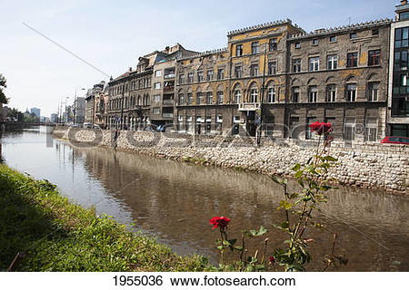 Stock Images of Red Roses Along The Miljacka River, Sarajevo.