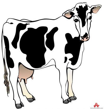 Milk Cow.