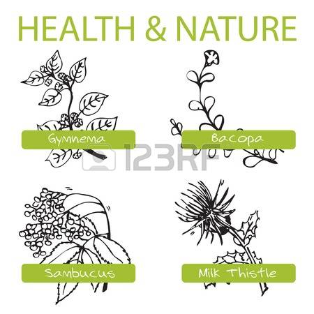 103 Milk Thistle Stock Vector Illustration And Royalty Free Milk.