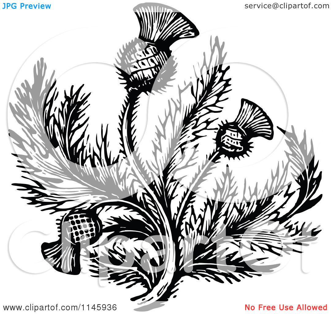 Scottish Thistle Clipart