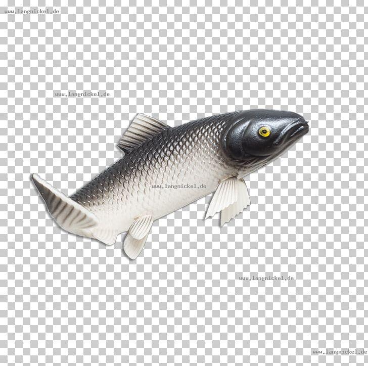 Milkfish PNG, Clipart, Fish, Fish Shop, Milkfish Free PNG.