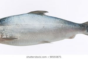 Milkfish clipart » Clipart Portal.