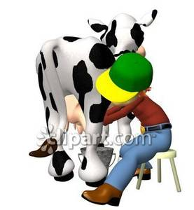 Milking A Dairy Cow.