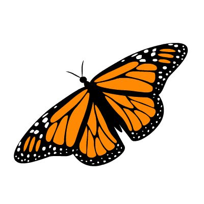 1000+ images about Monarch Butterflies and caterpillars on.