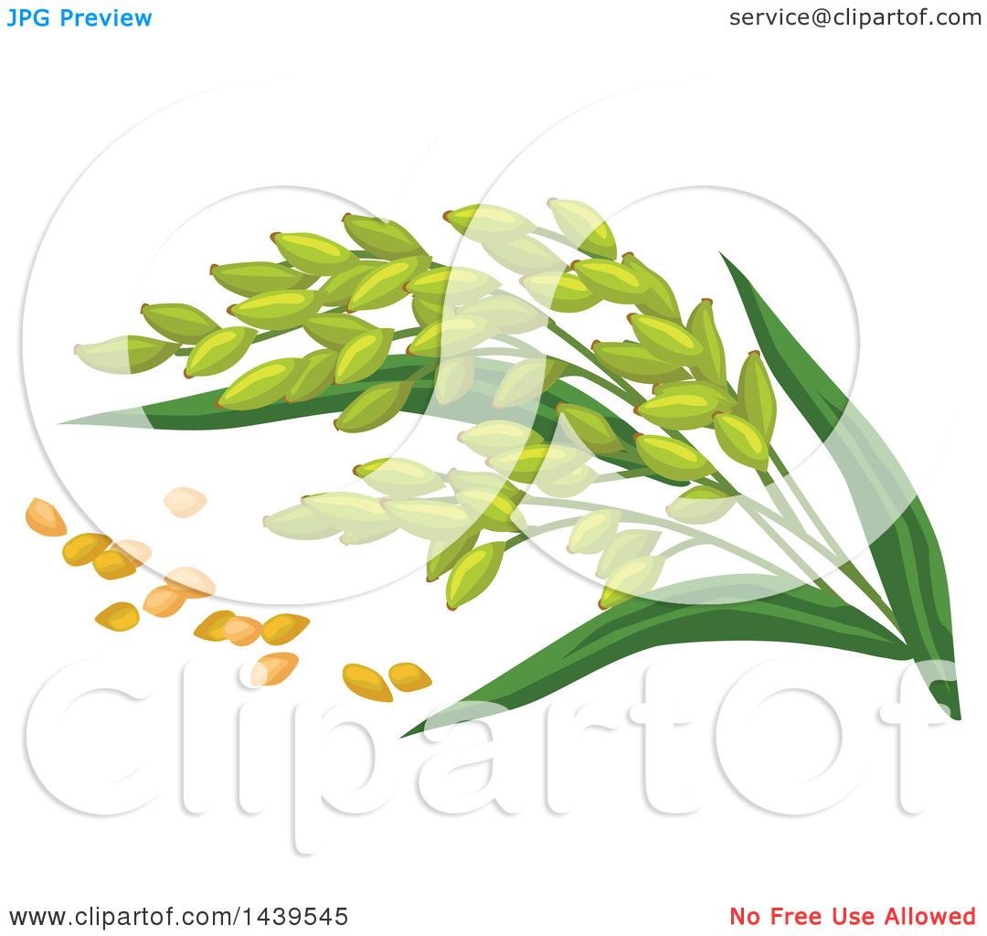 Clipart of Millet and Stalks.
