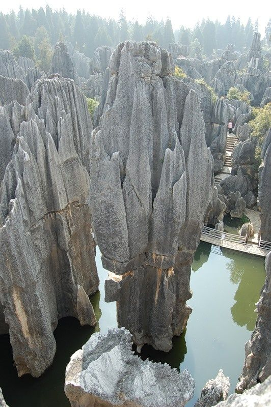 The Stone Forest (Shilin), China Many of the trees within the.