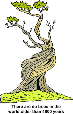 Image download: Old Tree.