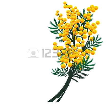 1,466 Mimosa Stock Vector Illustration And Royalty Free Mimosa Clipart.