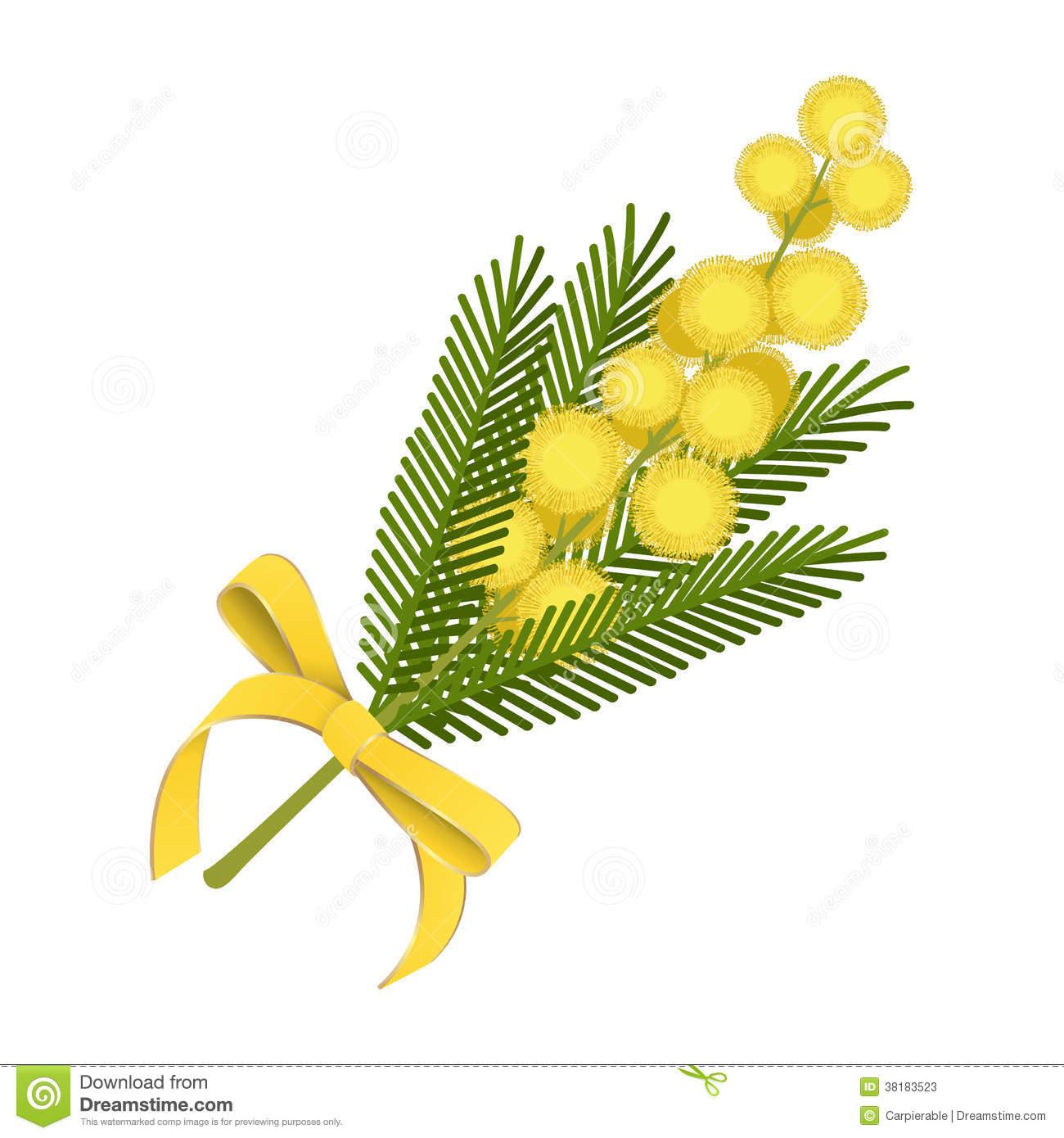 Mimosa Stock Illustrations.