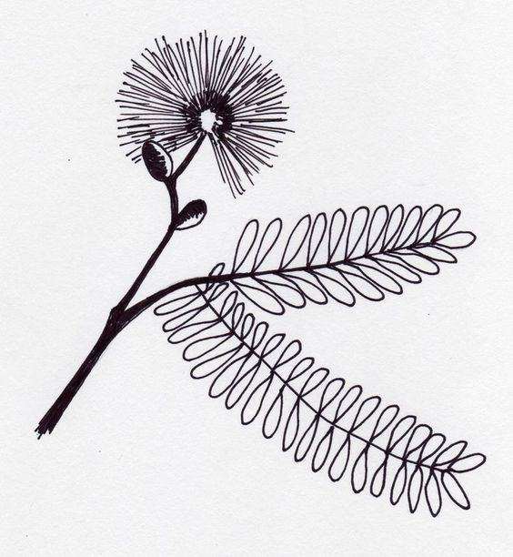 Mimosa pudica tattoo. Very symbolic to me. Grandfathers plant.