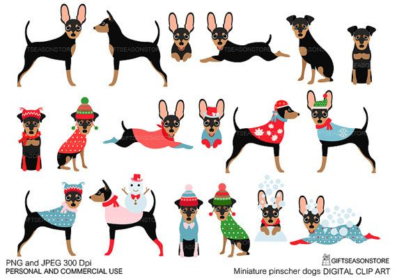 Miniature pinscher dogs Digital clip art for Personal and.