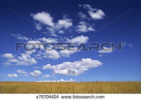 Stock Photo of Cumulus clouds over grasslands, cerrado / campo.