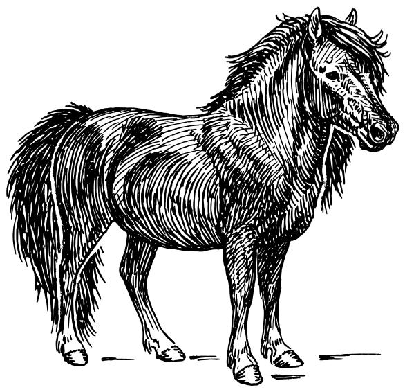 Miniature horse clipart.