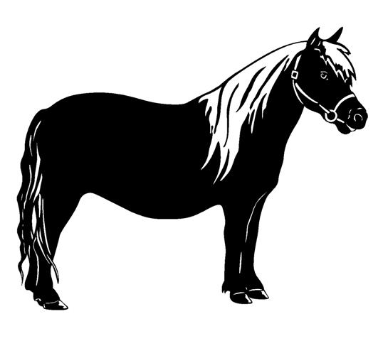 Showing post & media for Miniature horse cartoon.