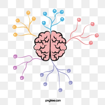 Brain Png, Vector, PSD, and Clipart With Transparent.