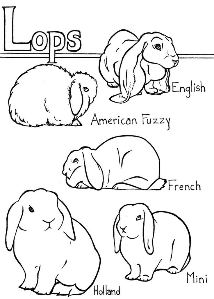 Lop Eared Bunny Coloring Pages.