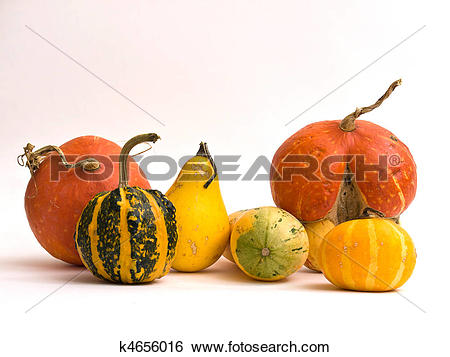 Stock Images of Mini Pumpkins Isolated on a White Background.