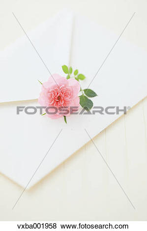 Pictures of Miniature rose and letter vxba001958.