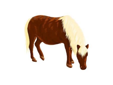 238 Miniature Horse Stock Illustrations, Cliparts And.