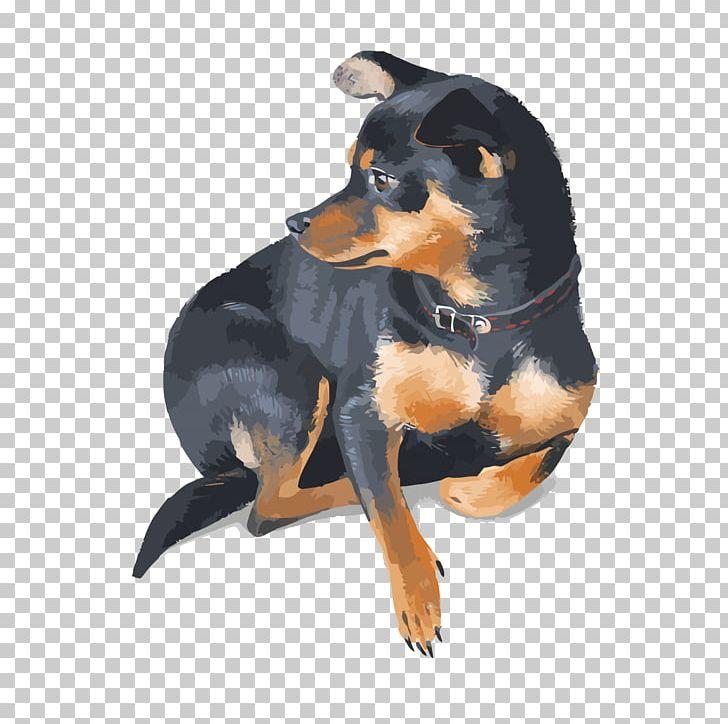 Miniature Pinscher Rottweiler Pet PNG, Clipart, Adobe.