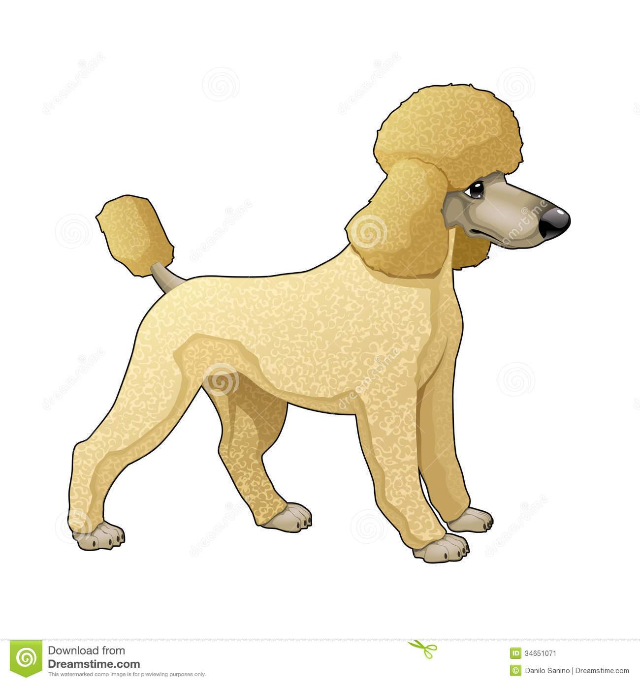 Toy Poodle Clip Art.