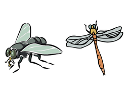 Minibeasts / Insects for EYFS / KS1: PowerPoint lessons, activities and  display pack.