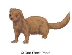 Mink Clipart and Stock Illustrations. 131 Mink vector EPS.