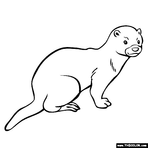 Mink Coloring Page.