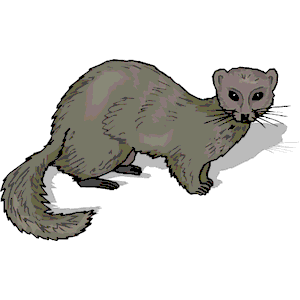 Mink Clipart.