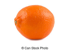 Stock Photographs of Minneola orange.