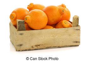 Minneola tangelo fruit Stock Photo Images. 31 Minneola tangelo.