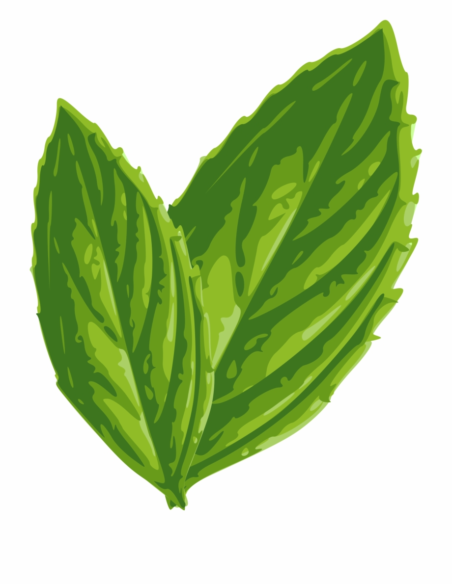 Download Mint Png Image.