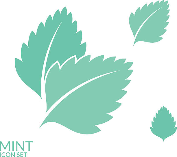 Best Mint Leaves Illustrations, Royalty.