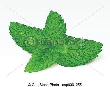 Mint clipart #12