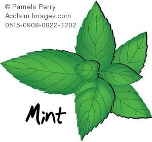 Mint Clip Art.