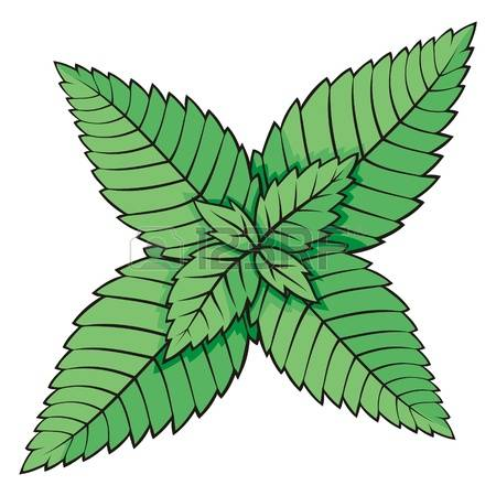 6,021 Mint Leaf Stock Illustrations, Cliparts And Royalty Free.