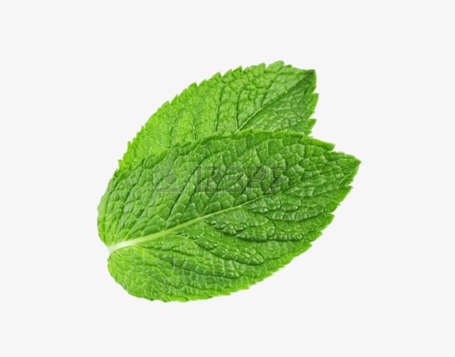 Two Mint Leaves PNG, Clipart, Chewing, Green, Gum, Leaf.