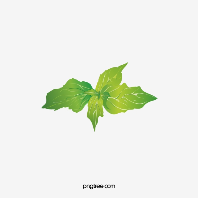 Mint Leaves PNG Images.