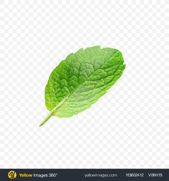 Download Mint Leaf Transparent PNG on Yellow Images 360°.