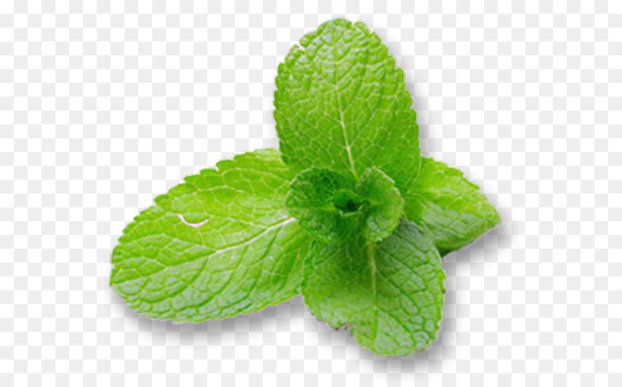 Plant Leaf png download.