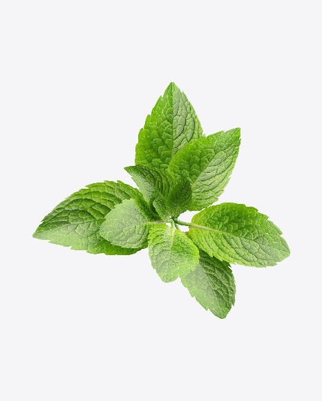 Download Mint Leaves Transparent PNG on Yellow Images 360°.